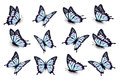 Set Of Blue Butterflies, Flying In Different Directions. Stock Images - 76920174