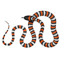 Coral Snake Vector Illustration Royalty Free Stock Images - 76935439