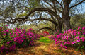 South Carolina Spring Flowers Charleston SC Lowcountry Scenic Royalty Free Stock Photography - 76951067