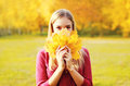 Portrait Beautiful Smiling Woman Hides Her Face Yellow Maple Leafs In Sunny Autumn Stock Photo - 76966790