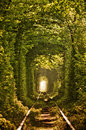 Natural Tunnel Of Love Formed By Trees Stock Photo - 76993210