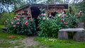 Shed And Peony Flowers Stock Image - 77012661