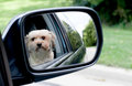 Dog Reflection Royalty Free Stock Image - 77102506