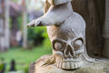 Feet On A Skull Close Up Detail Stock Photos - 77120163