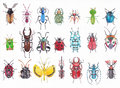 Set Of Watercolor Beetles. Royalty Free Stock Photos - 77148838