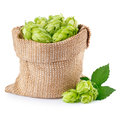 Hop Cones In Burlap Bag  Isolated On White Royalty Free Stock Images - 77197419