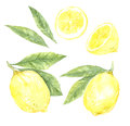 Hand Drawn Watercolor Illustrations - Collection Of Lemons. Blos Royalty Free Stock Image - 77233676