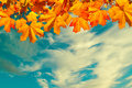 Autumn Nature Background With Space For Text - Orange Autumn Maple Leaves Against Sunset Sky. Vintage Filter Applied Stock Photography - 77498992