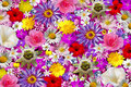 Flower Background Royalty Free Stock Images - 7755139