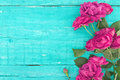 Frame Of Roses On Turquoise Rustic Wooden Background. Spring Flo Royalty Free Stock Photography - 77501477