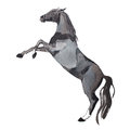 Watercolor Painting Of Rearing Up Horse, Brown Mustang Getting On Legs Aquarelle Drawing Stock Images - 77513154