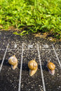 Snail Run, Near The Finish Line, One Two Three  On The Ground Ne Royalty Free Stock Photography - 77516917