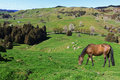 Horse Grazing On Picturesque Farmland Royalty Free Stock Photos - 77590728