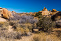 Joshua Tree National Park Lanscape Royalty Free Stock Photo - 77637225