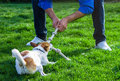 A Dog Playing With Its Owner By Pulling A Rope Royalty Free Stock Photo - 77666445