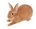 Rabbit Royalty Free Stock Photography - 77671387