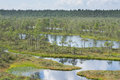 Swamp, Birches, Pines And Blue Water. Evening Sunlight In Bog. Reflection Of Marsh Trees. Fen, Lakes, Forest. Moor In Summer Eveni Royalty Free Stock Photos - 77701118