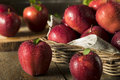 Raw Organic Red Delicious Apples Royalty Free Stock Photography - 77748047