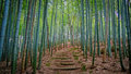 Bamboo Forest Royalty Free Stock Image - 77789976