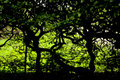 Dark Foliage And Twisted Trees Stock Image - 7780781