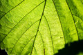 Young Spring Leaves On Green Background Stock Photography - 77808202