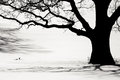 Silhouette Of An Old Tree In The Winter Royalty Free Stock Photography - 77819957