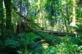 Fallen Tree Royalty Free Stock Images - 77821839
