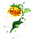 Freehand Painted Yellow Sunflower Stock Images - 77861974