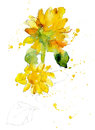 Freehand Painted Yellow Sunflower Royalty Free Stock Photography - 77862127