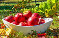 Fresh Delicious Autumn Red Apples Stock Image - 77868661