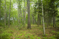 Forest Floor In Maine Royalty Free Stock Photos - 77938238