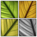 Multi Color Leafs Royalty Free Stock Photos - 781658