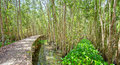 Small Road Through The Mangrove Forests Royalty Free Stock Photos - 78009298