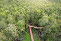 Small Road Through The Melaleuca Forests View From Above Royalty Free Stock Image - 78009436