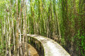 Small Road On Melaleuca Forests Royalty Free Stock Image - 78013326