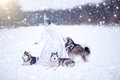 Beautiful Snow Queen With Dogs Stock Photo - 78142700