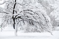 Snowing Landscape In The Park Royalty Free Stock Image - 78159456