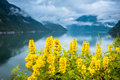 Natural Hardangerfjord Fjord Landscape Of Norway Royalty Free Stock Images - 78195789