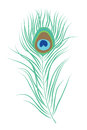 Peacock Feather Isolated Vector Illustration Stock Photography - 78251962