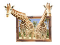 Two Giraffes In Bamboo Frame With 3d Effect Stock Photo - 78254500