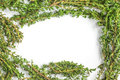 Bunch Of Fresh Thyme Frame Royalty Free Stock Images - 78279759