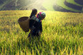 Mother And Daughter On Cornfield Stock Images - 78291084
