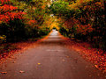 Autumn Road In The Park Stock Image - 7834681