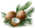 Coconuts On A Palm Leaves Royalty Free Stock Images - 78319629