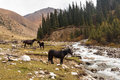Horses In Mountains Of Kyrgyzstan, Central Asia Royalty Free Stock Photos - 78405848