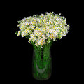 Bouquet Of Wild Daisies In A Glass Vase. Royalty Free Stock Photo - 78409585