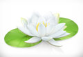 Water Lily. Lotus Flower. Vector Icon Royalty Free Stock Images - 78441039
