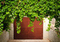 Green Grape Leaves Above Old Garage Door As Frame, Vintage Style Royalty Free Stock Photo - 78444155