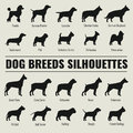 Dog Breeds Vector Silhouettes Set Royalty Free Stock Photography - 78448787
