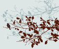 Oak Branches In The Autumn Stock Photo - 78455080